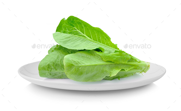 Cos Lettuce in plate isolated on white background - Stock Photo - Images