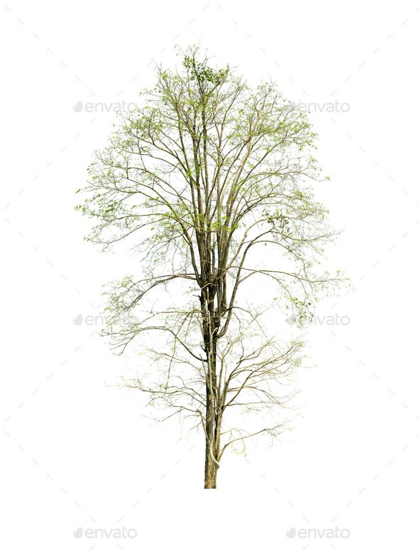 tree isolated on white background - Stock Photo - Images