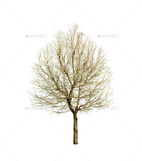 Spring tree isolated on white background - Stock Photo - Images