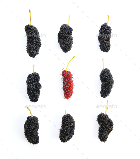 Mulberry berry isolated on white background - Stock Photo - Images