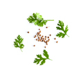 coriander leaf and seeds isolated on white background - PhotoDune Item for Sale
