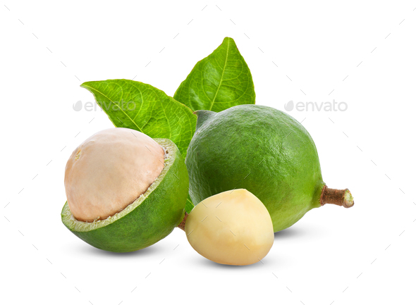 macadamia nuts with leaf isolated on white background. - Stock Photo - Images