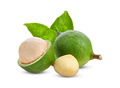 macadamia nuts with leaf isolated on white background. - PhotoDune Item for Sale