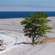 Limestone Beach on the Island of Gotland in Sweden - VideoHive Item for Sale