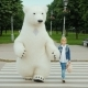 The Girl Takes Over the Paw on the Pedestrian Crossing of a Large Polar Bear. Safety Driving Concept - VideoHive Item for Sale