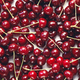 Close up of pile of ripe cherries with stalks - PhotoDune Item for Sale