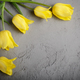 Yellow beautiful tulips on grey background with space for text - PhotoDune Item for Sale