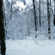 Snowy Branches in Forest. Winter Fairy Background - VideoHive Item for Sale