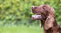 Happy smiling dog - PhotoDune Item for Sale