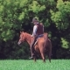 Cowboy Rider on a Horse in the Field - VideoHive Item for Sale