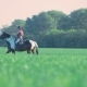 Cowboy Rider on a Horse Walking on the Field - VideoHive Item for Sale