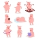Cartoon Pig Vector Piglet or Piggy Character