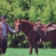 Cowboy Rider Stands Next To the Horse and Then Jumps on It and Jumps Riding It Into the Distance on - VideoHive Item for Sale