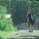 Horse Rider on the Ranch Is on the Path To the Shady Forest - VideoHive Item for Sale