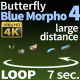 Butterfly Blue Morpho 4 - VideoHive Item for Sale