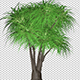 Ponytail Palm Tree - VideoHive Item for Sale