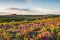 Summer at Ibsley Common - PhotoDune Item for Sale