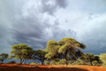 African landscape against a stormy sky - PhotoDune Item for Sale