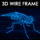 Fly 3D Wire Frame - VideoHive Item for Sale