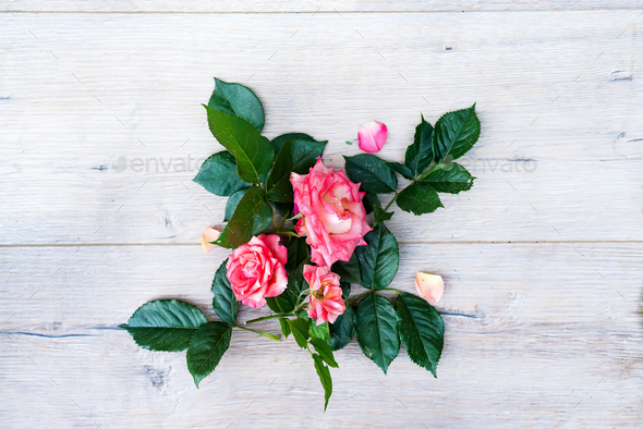 Pink rose flowers arrangement isolated on wooden gray background - Stock Photo - Images