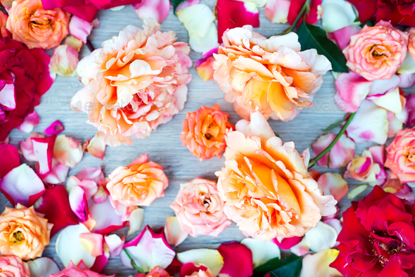 Soft color Roses Background on wooden - Stock Photo - Images