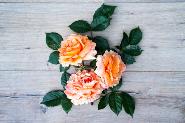peach rose flowers arrangement isolated on wooden gray background - Stock Photo - Images