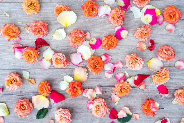 Roses and petals background. Roses and petals scattered on wooden gray background, overhead view - Stock Photo - Images