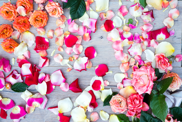 Natural colorful roses background on wooden - Stock Photo - Images