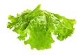 Leaf of lettuce isolated - PhotoDune Item for Sale