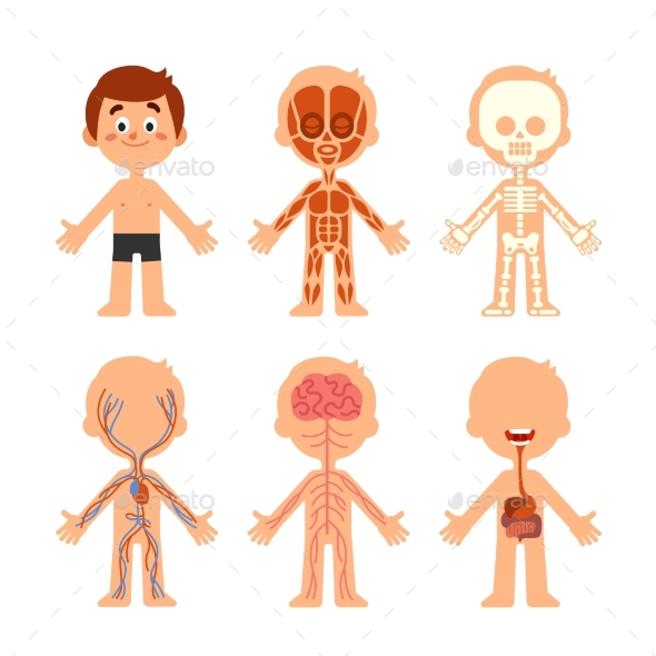 Cartoon Boy Body Anatomy By Tartila Graphicriver