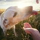 Thirsty dog at sunset - PhotoDune Item for Sale