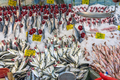 Choice of fish at a market in Istanbul - PhotoDune Item for Sale
