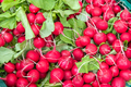 Radish for sale at a market - PhotoDune Item for Sale