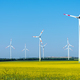 Flowering field of rapeseed with wind energy plants - PhotoDune Item for Sale