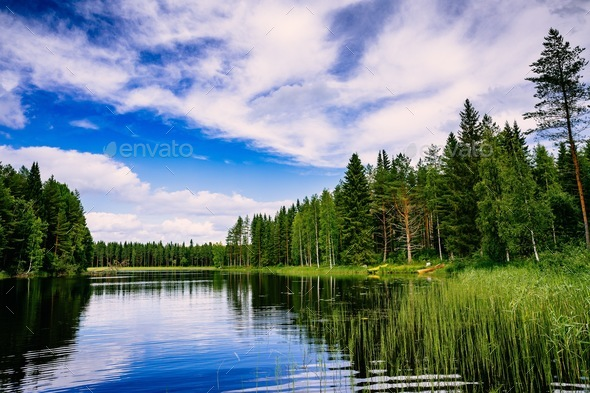 Blue lake and green forest on a sunny summer day in Finland - Stock Photo - Images