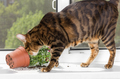 Cat dropped the flower pot on the windowsill. - PhotoDune Item for Sale