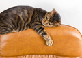 Cat lies on back of scratched leather armchair. Scratched leathe - PhotoDune Item for Sale