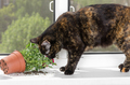 Cat tortoiseshell color dropped the flower pot on the windowsill - PhotoDune Item for Sale