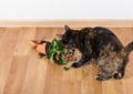 Domestic cat tortoiseshell color dropped and broke flower pot. - PhotoDune Item for Sale