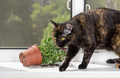 Domestic cat dropped the flower pot on the windowsill. - PhotoDune Item for Sale