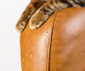 Scratches from cat claws on leather furniture. Cat's paws close- - PhotoDune Item for Sale