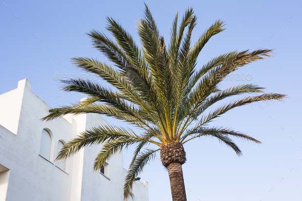 Palm tree against blue sky. - Stock Photo - Images