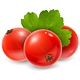 Red Currant - GraphicRiver Item for Sale