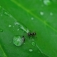 Ant and Aphid - VideoHive Item for Sale