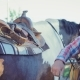 Cowboy Rider Fixes a Saddle on the Back of a Horse - VideoHive Item for Sale