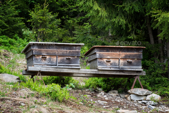 Old bee hives in forest - Stock Photo - Images