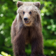 Brown bear cub in a spring forest - PhotoDune Item for Sale