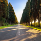 Bolgheri famous cypresses tree straight boulevard. Maremma, Tusc - PhotoDune Item for Sale