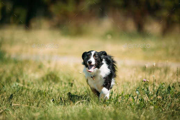 Funny Small Mixed Breed Dog Playing In Green Grass - Stock Photo - Images