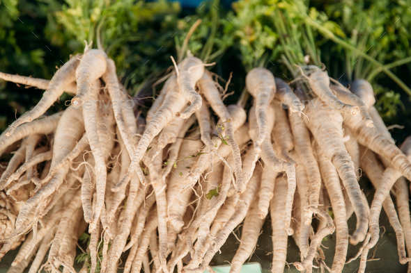 Pastinaca Or Parsnips. Flowering Plant On Local Agricultural Veg - Stock Photo - Images